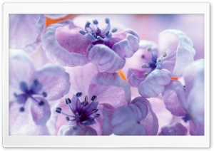 Lilac Flowers Close Up HD Wide Wallpaper for Widescreen