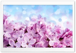 Lilac Macro HD Wide Wallpaper for Widescreen