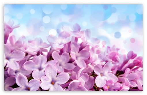 Lilac Macro ❤ 4K UHD Wallpaper for Wide 16:10 5:3 Widescreen WHXGA WQXGA WUXGA WXGA WGA ; 4K UHD 16:9 Ultra High Definition 2160p 1440p 1080p 900p 720p ; Standard 4:3 5:4 3:2 Fullscreen UXGA XGA SVGA QSXGA SXGA DVGA HVGA HQVGA ( Apple PowerBook G4 iPhone 4 3G 3GS iPod Touch ) ; Tablet 1:1 ; iPad 1/2/Mini ; Mobile 4:3 5:3 3:2 16:9 5:4 - UXGA XGA SVGA WGA DVGA HVGA HQVGA ( Apple PowerBook G4 iPhone 4 3G 3GS iPod Touch ) 2160p 1440p 1080p 900p 720p QSXGA SXGA ; Dual 16:10 5:3 16:9 4:3 5:4 WHXGA WQXGA WUXGA WXGA WGA 2160p 1440p 1080p 900p 720p UXGA XGA SVGA QSXGA SXGA ;