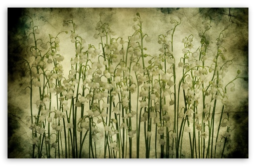 Lily Of The Valley Vintage Texture ❤ 4K UHD Wallpaper for Wide 16:10 5:3 Widescreen WHXGA WQXGA WUXGA WXGA WGA ; 4K UHD 16:9 Ultra High Definition 2160p 1440p 1080p 900p 720p ; Standard 4:3 5:4 3:2 Fullscreen UXGA XGA SVGA QSXGA SXGA DVGA HVGA HQVGA ( Apple PowerBook G4 iPhone 4 3G 3GS iPod Touch ) ; iPad 1/2/Mini ; Mobile 4:3 5:3 3:2 16:9 5:4 - UXGA XGA SVGA WGA DVGA HVGA HQVGA ( Apple PowerBook G4 iPhone 4 3G 3GS iPod Touch ) 2160p 1440p 1080p 900p 720p QSXGA SXGA ; Dual 16:10 5:3 4:3 5:4 WHXGA WQXGA WUXGA WXGA WGA UXGA XGA SVGA QSXGA SXGA ;