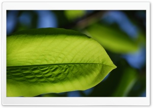 Lime Green Ultra HD Wallpaper for 4K UHD Widescreen desktop, tablet & smartphone