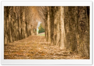 Lines Of Trees HD Wide Wallpaper for Widescreen