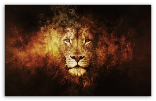 Lion UltraHD Wallpaper for Wide 16:10 5:3 Widescreen WHXGA WQXGA WUXGA WXGA WGA ; 8K UHD TV 16:9 Ultra High Definition 2160p 1440p 1080p 900p 720p ; Standard 4:3 5:4 3:2 Fullscreen UXGA XGA SVGA QSXGA SXGA DVGA HVGA HQVGA ( Apple PowerBook G4 iPhone 4 3G 3GS iPod Touch ) ; Tablet 1:1 ; iPad 1/2/Mini ; Mobile 4:3 5:3 3:2 16:9 5:4 - UXGA XGA SVGA WGA DVGA HVGA HQVGA ( Apple PowerBook G4 iPhone 4 3G 3GS iPod Touch ) 2160p 1440p 1080p 900p 720p QSXGA SXGA ;