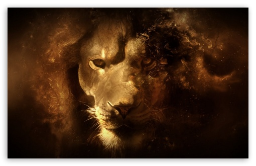 Lion HD wallpaper for Wide 16:10 5:3 Widescreen WHXGA WQXGA WUXGA WXGA WGA ; HD 16:9 High Definition WQHD QWXGA 1080p 900p 720p QHD nHD ; Standard 4:3 Fullscreen UXGA XGA SVGA ; iPad 1/2/Mini ; Mobile 4:3 5:3 - UXGA XGA SVGA WGA ;