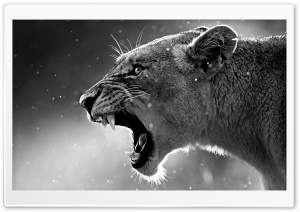Lion 4K ULTRA HD Ultra HD Wallpaper for 4K UHD Widescreen desktop, tablet & smartphone