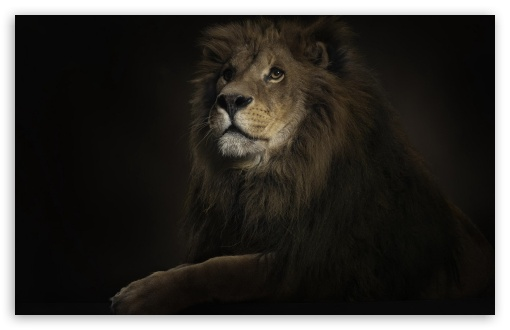 Lion King HD wallpaper for Wide 16:10 5:3 Widescreen WHXGA WQXGA WUXGA WXGA WGA ; HD 16:9 High Definition WQHD QWXGA 1080p 900p 720p QHD nHD ; Standard 4:3 5:4 3:2 Fullscreen UXGA XGA SVGA QSXGA SXGA DVGA HVGA HQVGA devices ( Apple PowerBook G4 iPhone 4 3G 3GS iPod Touch ) ; Tablet 1:1 ; iPad 1/2/Mini ; Mobile 4:3 5:3 3:2 16:9 5:4 - UXGA XGA SVGA WGA DVGA HVGA HQVGA devices ( Apple PowerBook G4 iPhone 4 3G 3GS iPod Touch ) WQHD QWXGA 1080p 900p 720p QHD nHD QSXGA SXGA ;