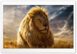 Lion King HD Wide Wallpaper for Widescreen