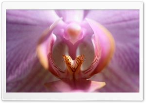 Lips Of The Orchid HD Wide Wallpaper for Widescreen