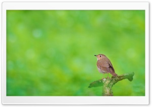 Little Bird Ultra HD Wallpaper for 4K UHD Widescreen desktop, tablet & smartphone