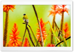 Little Bird Standing in the Rain HD Wide Wallpaper for Widescreen