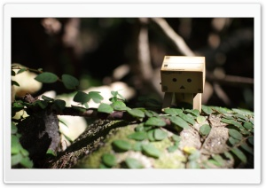 Little Danbo HD Wide Wallpaper for Widescreen
