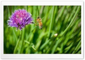 Little Honey Bee HD Wide Wallpaper for Widescreen