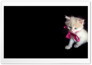 Little Kitty HD Wide Wallpaper for Widescreen