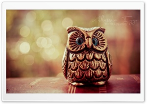 Little Lucky Owl HD Wide Wallpaper for Widescreen