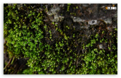 Little Moss HD wallpaper for Wide 16:10 5:3 Widescreen WHXGA WQXGA WUXGA WXGA WGA ; HD 16:9 High Definition WQHD QWXGA 1080p 900p 720p QHD nHD ; Standard 4:3 Fullscreen UXGA XGA SVGA ; Tablet 1:1 ; iPad 1/2/Mini ; Mobile 4:3 5:3 3:2 16:9 - UXGA XGA SVGA WGA DVGA HVGA HQVGA devices ( Apple PowerBook G4 iPhone 4 3G 3GS iPod Touch ) WQHD QWXGA 1080p 900p 720p QHD nHD ;