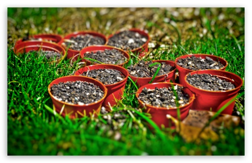 Little Pots HD wallpaper for Wide 16:10 5:3 Widescreen WHXGA WQXGA WUXGA WXGA WGA ; HD 16:9 High Definition WQHD QWXGA 1080p 900p 720p QHD nHD ; UHD 16:9 WQHD QWXGA 1080p 900p 720p QHD nHD ; Standard 3:2 Fullscreen DVGA HVGA HQVGA devices ( Apple PowerBook G4 iPhone 4 3G 3GS iPod Touch ) ; Mobile 5:3 3:2 16:9 - WGA DVGA HVGA HQVGA devices ( Apple PowerBook G4 iPhone 4 3G 3GS iPod Touch ) WQHD QWXGA 1080p 900p 720p QHD nHD ;