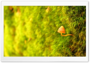 Little Sprout HD Wide Wallpaper for Widescreen