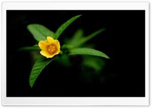 Little Yellow Flower Green Leaves Ultra HD Wallpaper for 4K UHD Widescreen desktop, tablet & smartphone