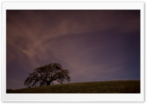 Live Oak At Twilight HD Wide Wallpaper for Widescreen