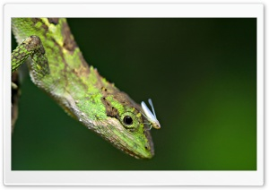 Lizard And Grasshopper HD Wide Wallpaper for Widescreen