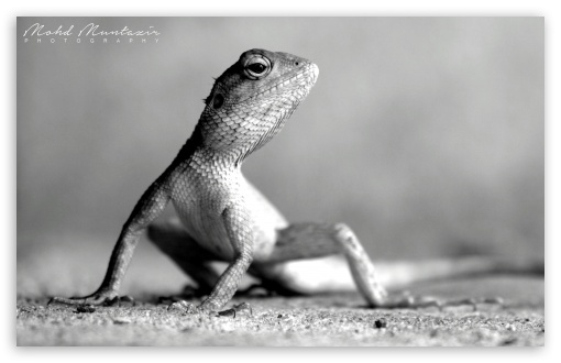 Lizard Pose ❤ 4K UHD Wallpaper for Wide 16:10 5:3 Widescreen WHXGA WQXGA WUXGA WXGA WGA ; 4K UHD 16:9 Ultra High Definition 2160p 1440p 1080p 900p 720p ; UHD 16:9 2160p 1440p 1080p 900p 720p ; Standard 4:3 3:2 Fullscreen UXGA XGA SVGA DVGA HVGA HQVGA ( Apple PowerBook G4 iPhone 4 3G 3GS iPod Touch ) ; iPad 1/2/Mini ; Mobile 4:3 5:3 3:2 16:9 - UXGA XGA SVGA WGA DVGA HVGA HQVGA ( Apple PowerBook G4 iPhone 4 3G 3GS iPod Touch ) 2160p 1440p 1080p 900p 720p ;