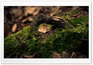 Log Covered In Moss HD Wide Wallpaper for Widescreen