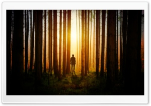Lone Man in the Woods Ultra HD Wallpaper for 4K UHD Widescreen desktop, tablet & smartphone