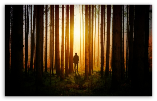Lone Man in the Woods UltraHD Wallpaper for Wide 16:10 5:3 Widescreen WHXGA WQXGA WUXGA WXGA WGA ; UltraWide 21:9 24:10 ; 8K UHD TV 16:9 Ultra High Definition 2160p 1440p 1080p 900p 720p ; UHD 16:9 2160p 1440p 1080p 900p 720p ; Standard 4:3 5:4 3:2 Fullscreen UXGA XGA SVGA QSXGA SXGA DVGA HVGA HQVGA ( Apple PowerBook G4 iPhone 4 3G 3GS iPod Touch ) ; Smartphone 16:9 3:2 5:3 2160p 1440p 1080p 900p 720p DVGA HVGA HQVGA ( Apple PowerBook G4 iPhone 4 3G 3GS iPod Touch ) WGA ; Tablet 1:1 ; iPad 1/2/Mini ; Mobile 4:3 5:3 3:2 16:9 5:4 - UXGA XGA SVGA WGA DVGA HVGA HQVGA ( Apple PowerBook G4 iPhone 4 3G 3GS iPod Touch ) 2160p 1440p 1080p 900p 720p QSXGA SXGA ;
