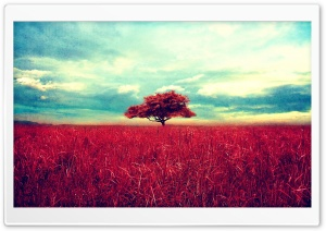 Lone Red Tree HD Wide Wallpaper for 4K UHD Widescreen desktop & smartphone