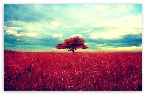 Lone Red Tree HD wallpaper for Wide 16:10 5:3 Widescreen WHXGA WQXGA WUXGA WXGA WGA ; HD 16:9 High Definition WQHD QWXGA 1080p 900p 720p QHD nHD ; Standard 4:3 5:4 3:2 Fullscreen UXGA XGA SVGA QSXGA SXGA DVGA HVGA HQVGA devices ( Apple PowerBook G4 iPhone 4 3G 3GS iPod Touch ) ; Tablet 1:1 ; iPad 1/2/Mini ; Mobile 4:3 5:3 3:2 16:9 5:4 - UXGA XGA SVGA WGA DVGA HVGA HQVGA devices ( Apple PowerBook G4 iPhone 4 3G 3GS iPod Touch ) WQHD QWXGA 1080p 900p 720p QHD nHD QSXGA SXGA ;