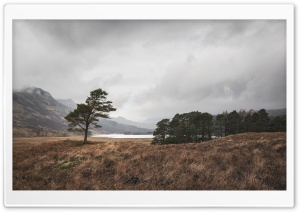 Lone Scots Pine Landscape Ultra HD Wallpaper for 4K UHD Widescreen desktop, tablet & smartphone