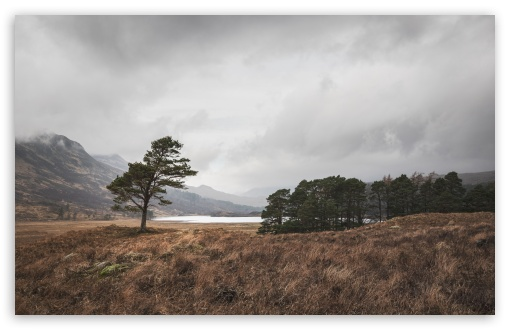Lone Scots Pine Landscape UltraHD Wallpaper for Wide 16:10 5:3 Widescreen WHXGA WQXGA WUXGA WXGA WGA ; UltraWide 21:9 24:10 ; 8K UHD TV 16:9 Ultra High Definition 2160p 1440p 1080p 900p 720p ; UHD 16:9 2160p 1440p 1080p 900p 720p ; Standard 4:3 5:4 3:2 Fullscreen UXGA XGA SVGA QSXGA SXGA DVGA HVGA HQVGA ( Apple PowerBook G4 iPhone 4 3G 3GS iPod Touch ) ; Smartphone 16:9 3:2 5:3 2160p 1440p 1080p 900p 720p DVGA HVGA HQVGA ( Apple PowerBook G4 iPhone 4 3G 3GS iPod Touch ) WGA ; Tablet 1:1 ; iPad 1/2/Mini ; Mobile 4:3 5:3 3:2 16:9 5:4 - UXGA XGA SVGA WGA DVGA HVGA HQVGA ( Apple PowerBook G4 iPhone 4 3G 3GS iPod Touch ) 2160p 1440p 1080p 900p 720p QSXGA SXGA ;