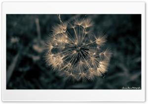 Lone Survivor HD Wide Wallpaper for 4K UHD Widescreen desktop & smartphone