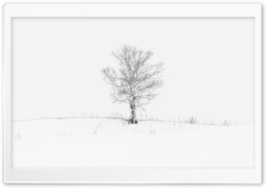 Lone Tree HD Wide Wallpaper for Widescreen