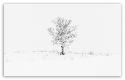 Lone Tree HD wallpaper for Wide 16:10 5:3 Widescreen WHXGA WQXGA WUXGA WXGA WGA ; HD 16:9 High Definition WQHD QWXGA 1080p 900p 720p QHD nHD ; UHD 16:9 WQHD QWXGA 1080p 900p 720p QHD nHD ; Standard 4:3 5:4 3:2 Fullscreen UXGA XGA SVGA QSXGA SXGA DVGA HVGA HQVGA devices ( Apple PowerBook G4 iPhone 4 3G 3GS iPod Touch ) ; Smartphone 5:3 WGA ; Tablet 1:1 ; iPad 1/2/Mini ; Mobile 4:3 5:3 3:2 16:9 5:4 - UXGA XGA SVGA WGA DVGA HVGA HQVGA devices ( Apple PowerBook G4 iPhone 4 3G 3GS iPod Touch ) WQHD QWXGA 1080p 900p 720p QHD nHD QSXGA SXGA ; Dual 5:4 QSXGA SXGA ;