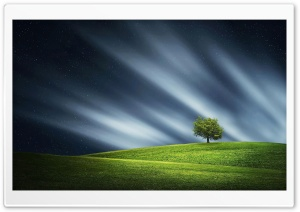 Lone Tree HD Wide Wallpaper for 4K UHD Widescreen desktop & smartphone