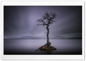 Lone Tree, Calm Water Lake, Long Exposure Ultra HD Wallpaper for 4K UHD Widescreen desktop, tablet & smartphone