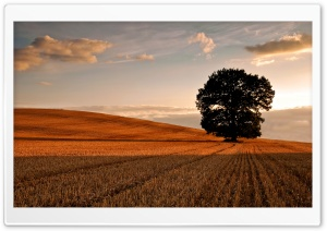 Lone Tree In Field, Autumn HD Wide Wallpaper for Widescreen