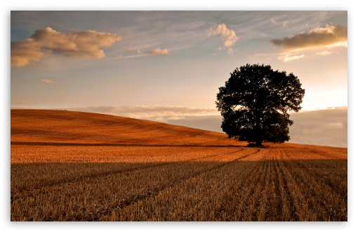 Lone Tree In Field, Autumn HD wallpaper for Wide 16:10 5:3 Widescreen WHXGA WQXGA WUXGA WXGA WGA ; HD 16:9 High Definition WQHD QWXGA 1080p 900p 720p QHD nHD ; Standard 4:3 5:4 3:2 Fullscreen UXGA XGA SVGA QSXGA SXGA DVGA HVGA HQVGA devices ( Apple PowerBook G4 iPhone 4 3G 3GS iPod Touch ) ; Tablet 1:1 ; iPad 1/2/Mini ; Mobile 4:3 5:3 3:2 16:9 5:4 - UXGA XGA SVGA WGA DVGA HVGA HQVGA devices ( Apple PowerBook G4 iPhone 4 3G 3GS iPod Touch ) WQHD QWXGA 1080p 900p 720p QHD nHD QSXGA SXGA ; Dual 16:10 5:4 WHXGA WQXGA WUXGA WXGA QSXGA SXGA ;