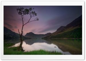 Lone Tree, Lake, Buttermere, England Ultra HD Wallpaper for 4K UHD Widescreen desktop, tablet & smartphone