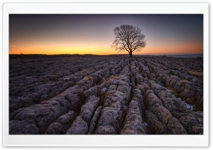 Lone Tree, Limestone pavement, Malham Ultra HD Wallpaper for 4K UHD Widescreen desktop, tablet & smartphone