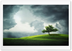 Lone Tree on a Hill HD Wide Wallpaper for Widescreen