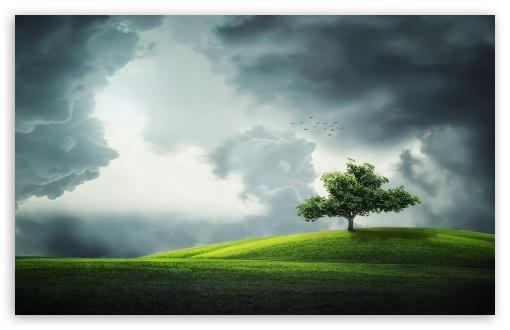Lone Tree On A Hill Ultra Hd Desktop Background Wallpaper