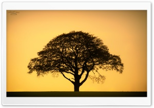 Lone Tree silhouette HD Wide Wallpaper for 4K UHD Widescreen desktop & smartphone