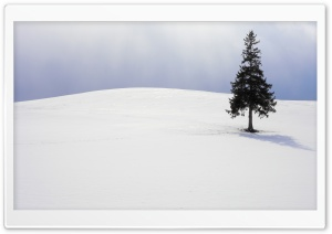 Lone Tree, Winter HD Wide Wallpaper for 4K UHD Widescreen desktop & smartphone