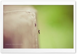 Lonely Ant HD Wide Wallpaper for Widescreen