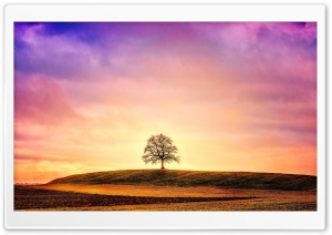 Lonely Barren Tree Ultra HD Wallpaper for 4K UHD Widescreen desktop, tablet & smartphone