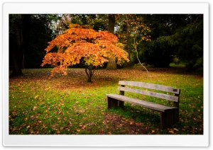 Lonely Bench HD Wide Wallpaper for Widescreen