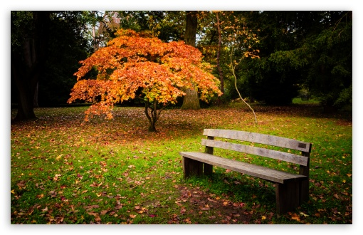 Lonely Bench HD wallpaper for Wide 16:10 5:3 Widescreen WHXGA WQXGA WUXGA WXGA WGA ; HD 16:9 High Definition WQHD QWXGA 1080p 900p 720p QHD nHD ; UHD 16:9 WQHD QWXGA 1080p 900p 720p QHD nHD ; Standard 4:3 5:4 3:2 Fullscreen UXGA XGA SVGA QSXGA SXGA DVGA HVGA HQVGA devices ( Apple PowerBook G4 iPhone 4 3G 3GS iPod Touch ) ; Smartphone 5:3 WGA ; Tablet 1:1 ; iPad 1/2/Mini ; Mobile 4:3 5:3 3:2 16:9 5:4 - UXGA XGA SVGA WGA DVGA HVGA HQVGA devices ( Apple PowerBook G4 iPhone 4 3G 3GS iPod Touch ) WQHD QWXGA 1080p 900p 720p QHD nHD QSXGA SXGA ;