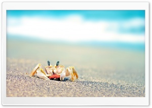 Lonely Crab HD Wide Wallpaper for Widescreen